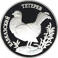 Caucasian black grouse